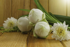 White lotus for respect Buddha with light from top Royalty Free Stock Photos