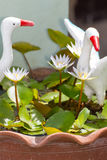 white lotus with White Pelicans statue Royalty Free Stock Photography