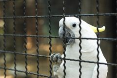White Macaw Stock Image