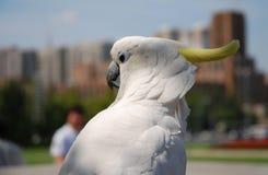 White Macaw in garden. A white Macaw in garden locate in Dalian, China Stock Image