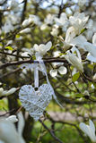 White magnolia. And a heart shape Stock Photo