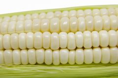 White Maize Corn. On White Background Stock Photography