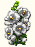 White mallow. Big white beautiful flowers of mallow. Crayon drawing Royalty Free Stock Photo