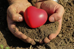 Man holds red heart in palms Stock Image