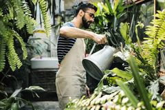 White man taking care of the plants stock photo
