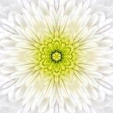 White Mandala Concentric Flower Center Kaleidoscope Stock Image