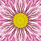 White Mandala Flower with Purple Stripes and Yellow Center Stock Photo
