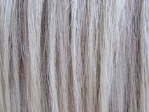 White Mane Horse Hairs Background Stock Photography