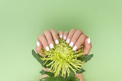White manicure with flower on green background stock photos