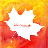 White maple leaf on orange watercolor background Stock Image