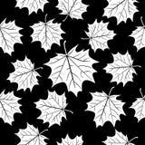 White maple leaves over black, seamless pattern. Autumn vector background. White maple leaves over black, seamless pattern. Autumn vector background royalty free illustration