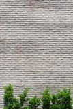 White Marble brick wall background and green tree Stock Photo
