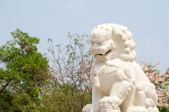 White marble Chinese guardian lion sculpture with tropical forrest. In the background royalty free stock photography