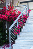 White marble staircase decorated with beautifull purple flowers Stock Photo