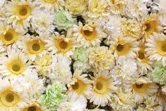 White marigold Stock Image