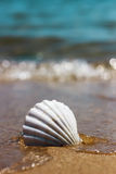 White marine shell on the sand Royalty Free Stock Photography