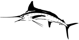 White marlin fish vector. Large predatory saltwater fish caught mostly on trolling either dead bait or artificial lure Stock Photo