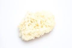 White Mashroom. On white background Stock Photography