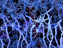 White matter: neurons with myelinated axons, oligodendrocytes forming the myelin sheaths, fibrous astrocytes and microglia cells stock images