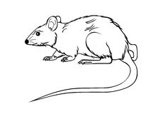 White mause. Laboratory mouse isolated on white Royalty Free Stock Image