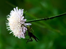 White meadow flower and insects. On a green background Royalty Free Stock Photo