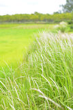 White meadows witn green fields Royalty Free Stock Images