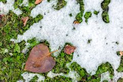 Abstract phot from the fallen first snow on the ground. Royalty Free Stock Images