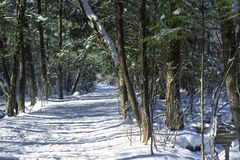 White Memorial Conservation Area Litchfield winter scene. A bridal trail leading through an evergreen forest at White memorial conservation area in Litchfield stock images