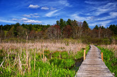 White Memorial Nature Area. A boardwalk through a wetland ecosystem at white memorial conservation center in Litchfield Connecticut on a beautiful spring day Royalty Free Stock Photo