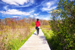 White Memorial Nature Area. A woman walking on a boardwalk through a wetland ecosystem at white memorial conservation center in Litchfield Connecticut on a Royalty Free Stock Images