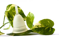 White menstrual cup with green leaves isolated in white backgrou Stock Photography