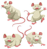 White mice Stock Images
