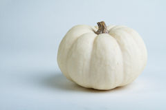 White mini decorative pumpkin Royalty Free Stock Image