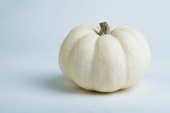 White mini decorative pumpkin Royalty Free Stock Image