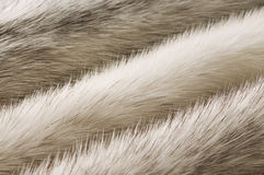 White mink fur texture Royalty Free Stock Photography