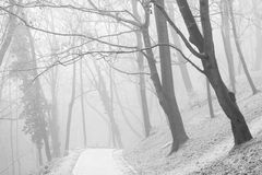 White misty forest park and vanishing path Stock Photos