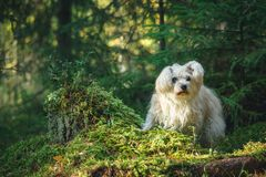 White mixed breed dog in forest Stock Photo