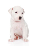 White mixed breed puppy. isolated on white background Stock Photos