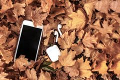 White mobile phone with earphones/headphones on a background of yellow leaves. stock photography