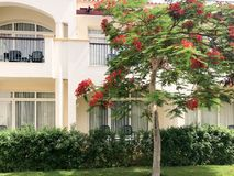 White modern cottage, villa, house, building and green tree with red flowers, royal delonis and shrubs plants on the tropical sea. Relax spa resort Stock Image