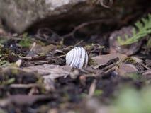 White mollusk nail royalty free stock photos