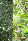 White mortar wall covered with green natural ivy Stock Photography