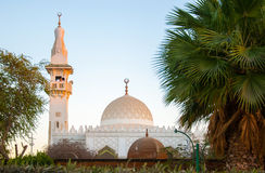 White mosque in the green palms in Egypt Stock Images