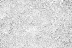 White Moss Wall. Stock Photo