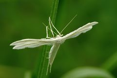 White moth Royalty Free Stock Photography