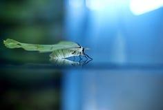 White moth Royalty Free Stock Photo