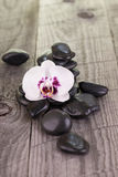White Moth orchid and black stones close-up Stock Photos