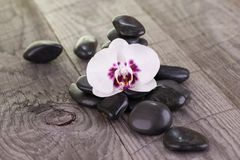White Moth orchid and black stones on weathered wood Royalty Free Stock Photography