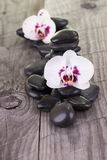 White Moth Orchids and black stones on weathered deck Royalty Free Stock Photography