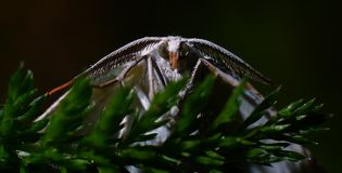 White moth on a twig Stock Photo